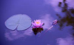 Zen Leadership